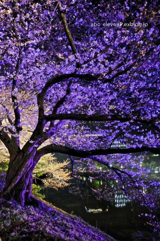 福岡城さくらまつり_f0315034_15483156.jpg
