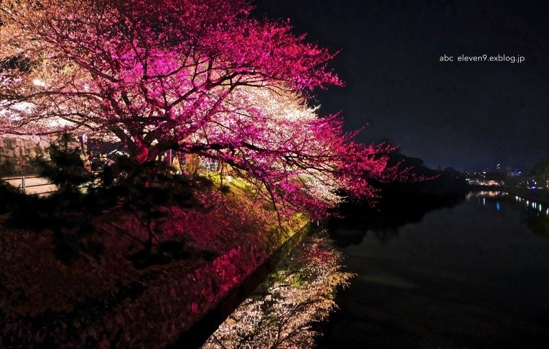福岡城さくらまつり_f0315034_16082219.jpg