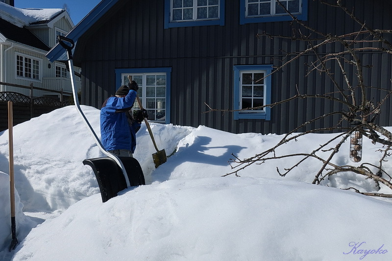 まだ雪かき_a0353839_06481762.jpg
