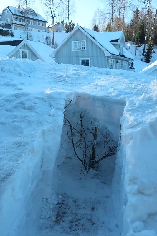まだ雪かき_a0353839_06533611.jpg
