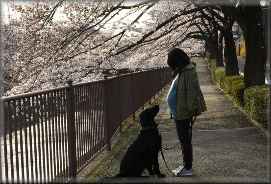 お花見散歩2018 @3月26日_f0363141_13360825.jpg