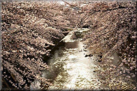 お花見散歩2018 @3月26日_f0363141_13431052.jpg