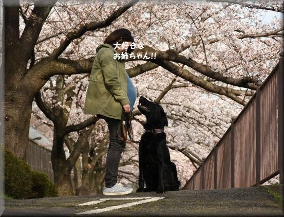 お花見散歩2018 @3月26日_f0363141_13523050.jpg