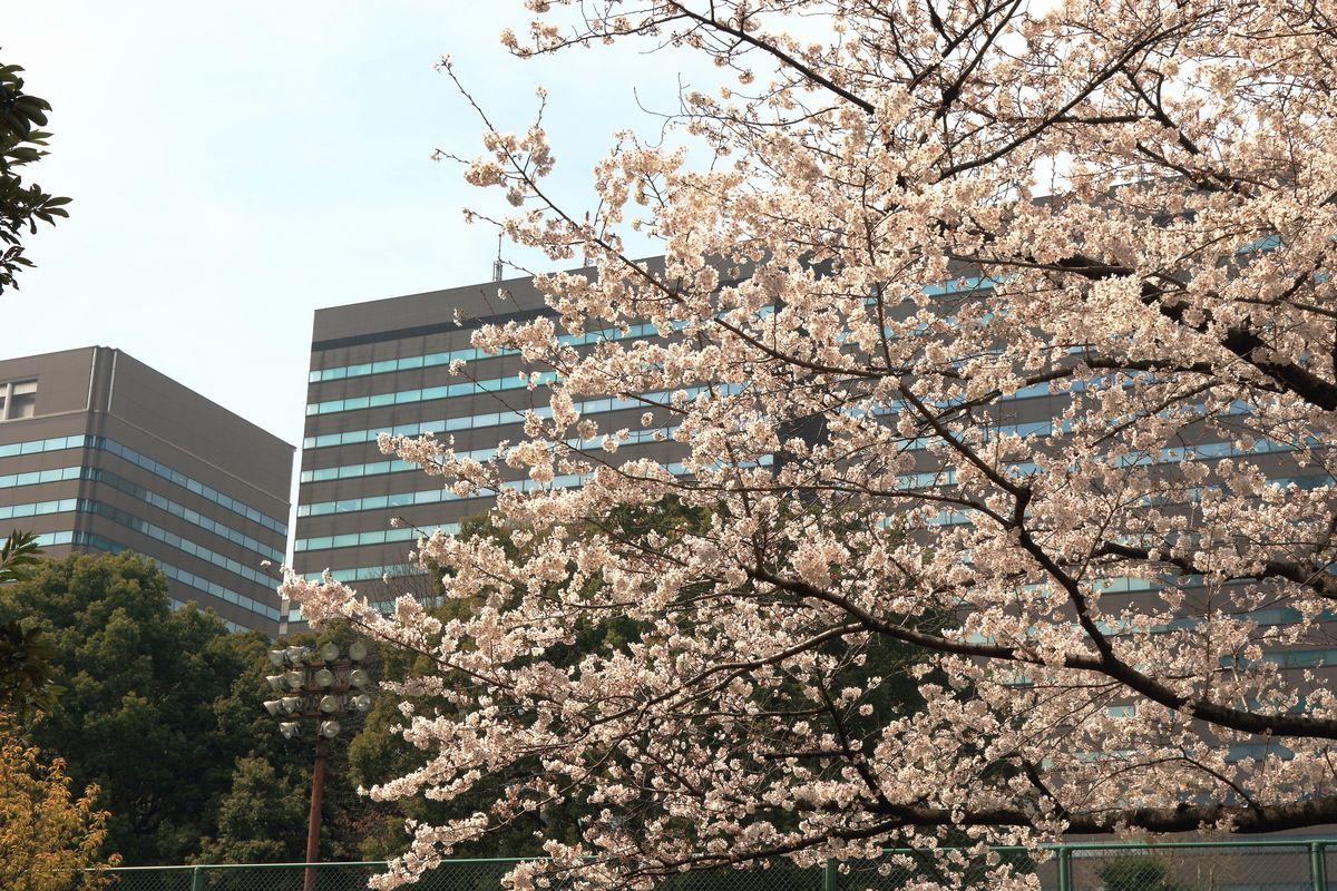 東京都心回遊_b0184848_15524444.jpg