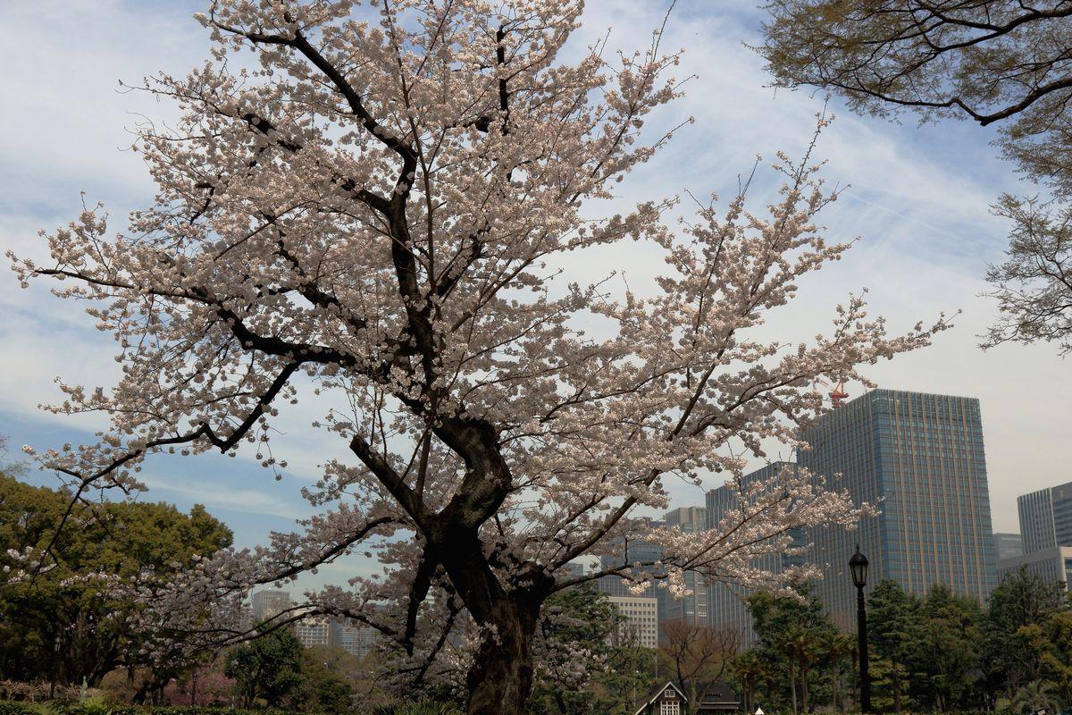 東京都心回遊_b0184848_15525862.jpg