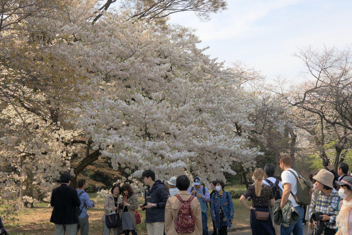 東京都心回遊_b0184848_1556139.jpg