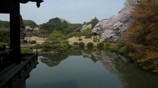 新宿御苑(3)_e0129750_22451467.jpg