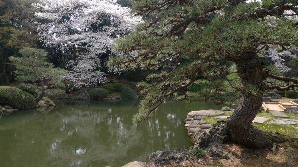 新宿御苑(3)_e0129750_22452758.jpg