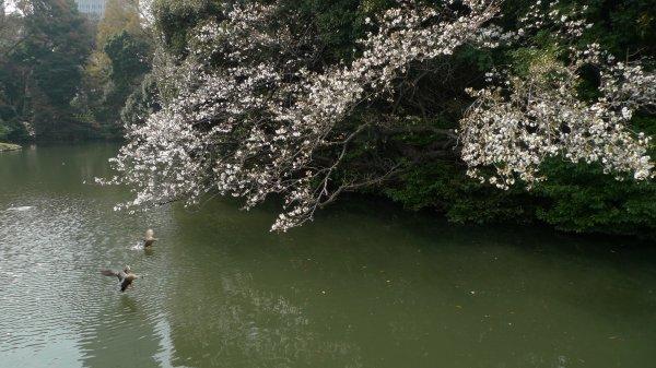 新宿御苑(3)_e0129750_22460589.jpg