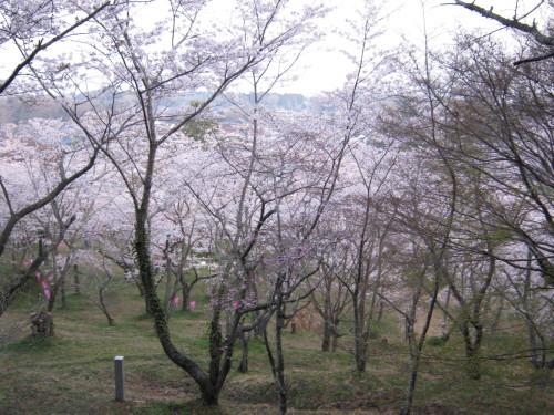 3月29日開花状況_c0363752_14403900.jpg