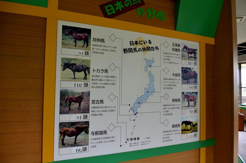 日本の馬_b0024758_16131895.jpg