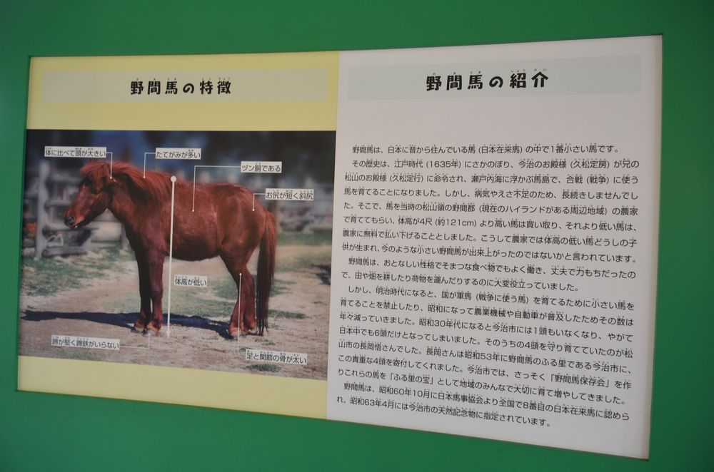 日本の馬_b0024758_16133436.jpg