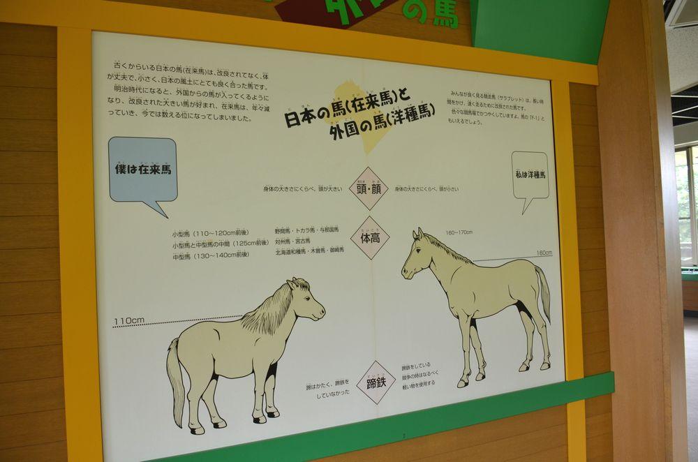 日本の馬_b0024758_16211598.jpg