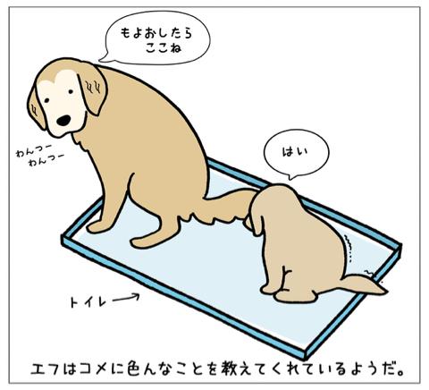 エフ漫画『エフの教え』_c0033759_21005902.jpg