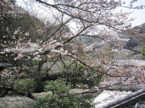 桜実況中継 2018_c0078659_15050131.jpg