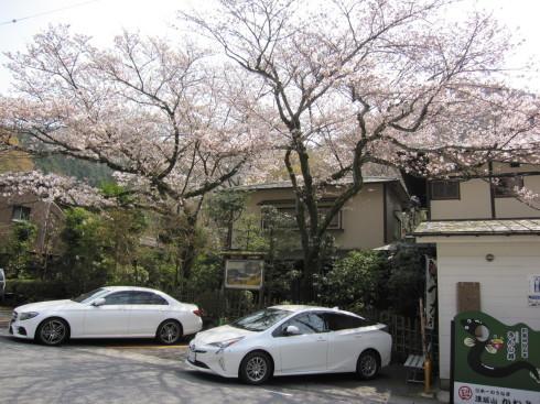 桜実況中継 2018_c0078659_15053391.jpg