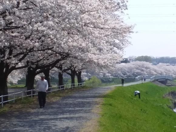 桜、桜、桜吹雪_d0116059_15554848.jpg