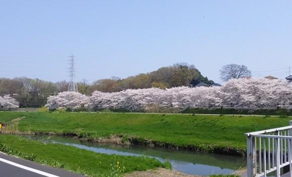 桜、桜、桜吹雪_d0116059_16002233.jpg