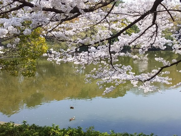 桜、桜、桜吹雪_d0116059_16054239.jpg