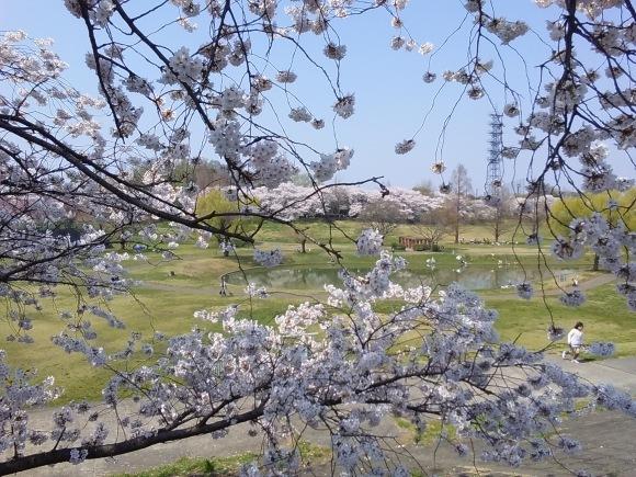 桜、桜、桜吹雪_d0116059_16265680.jpg