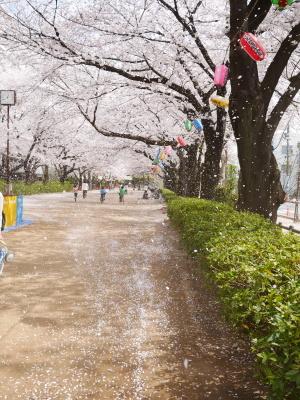 桜吹雪_a0027275_22220600.jpg