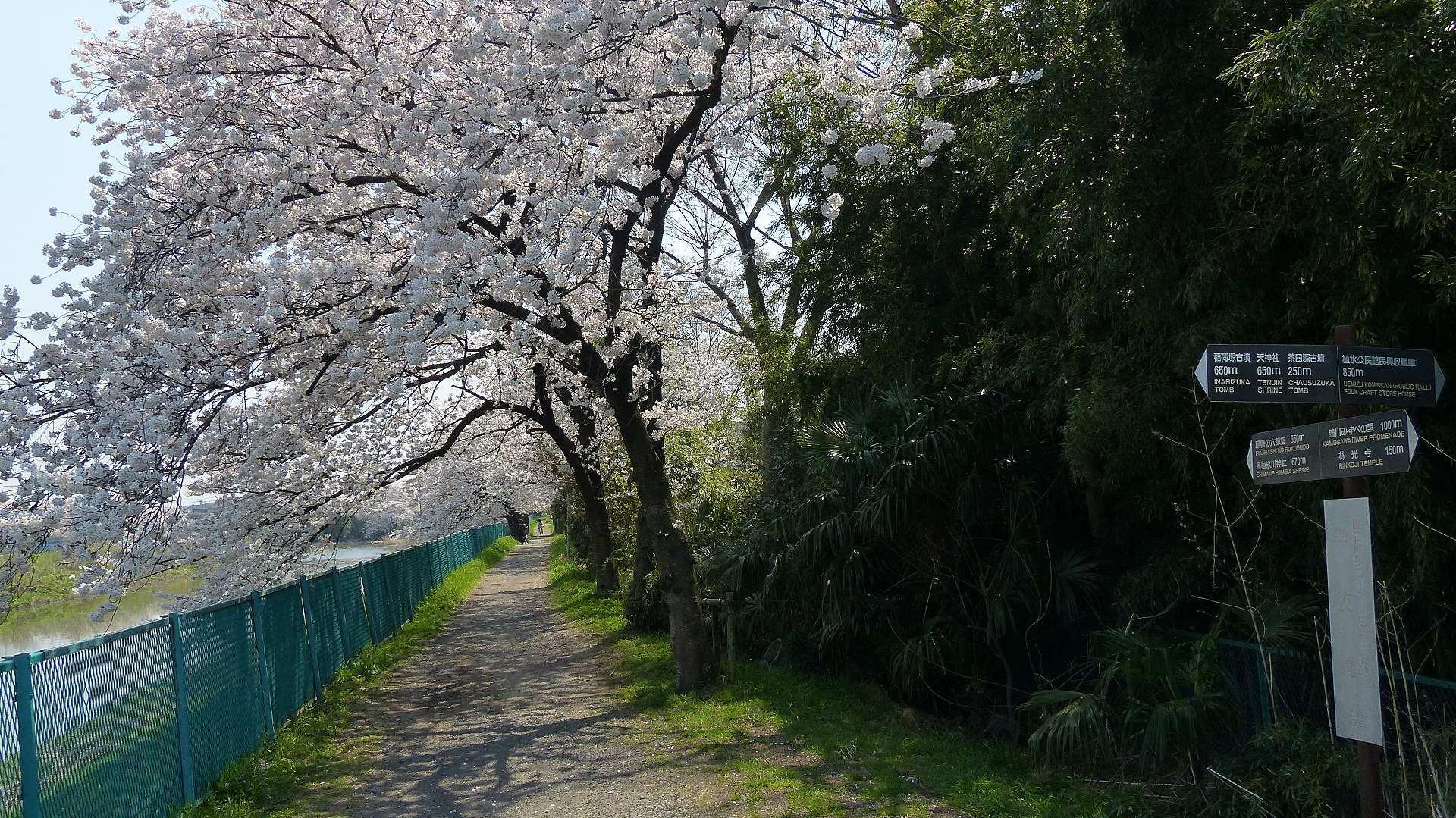 花見のあとは社寺を巡る_a0185081_12362887.jpg
