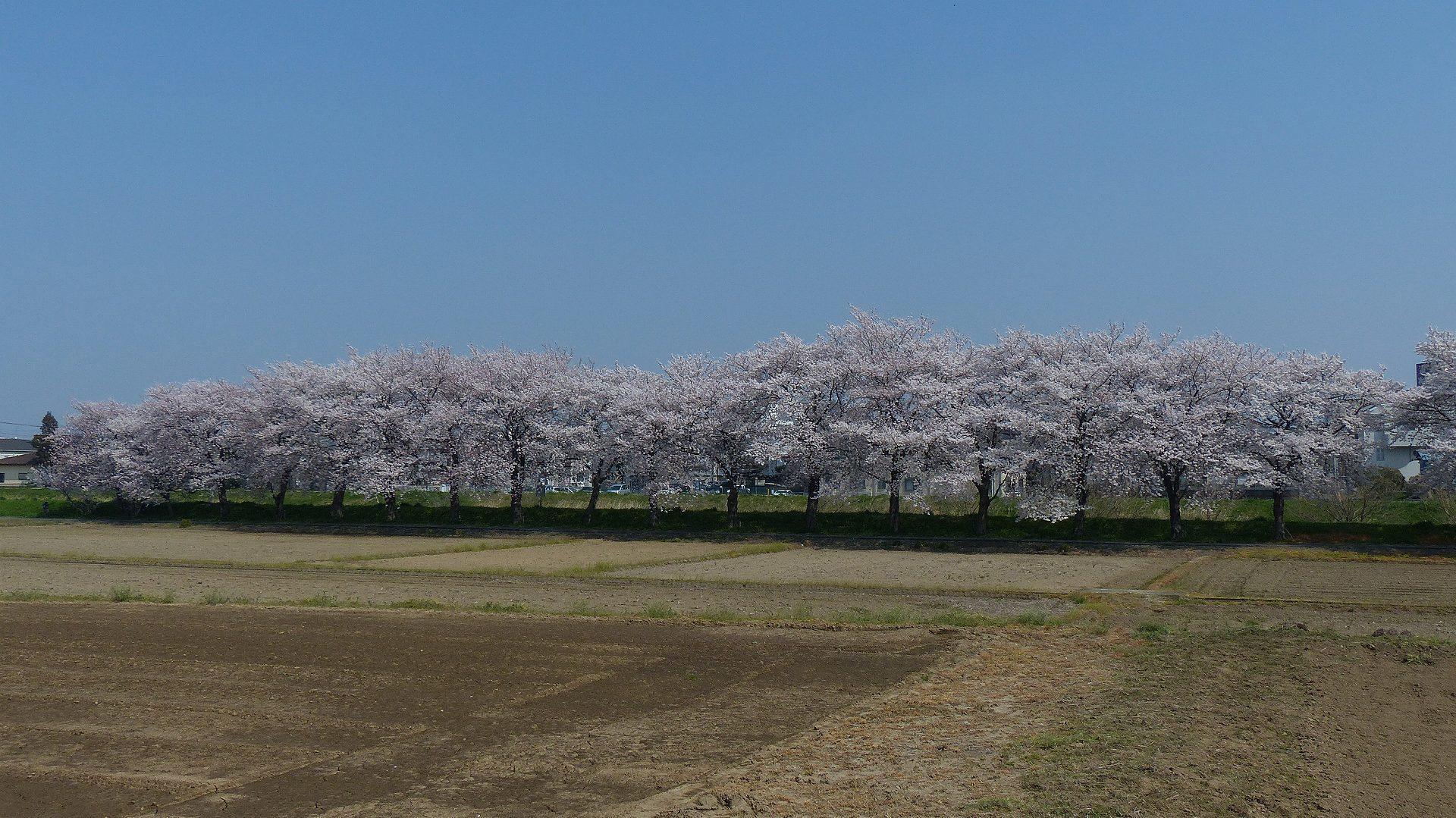 花見のあとは社寺を巡る_a0185081_14242212.jpg