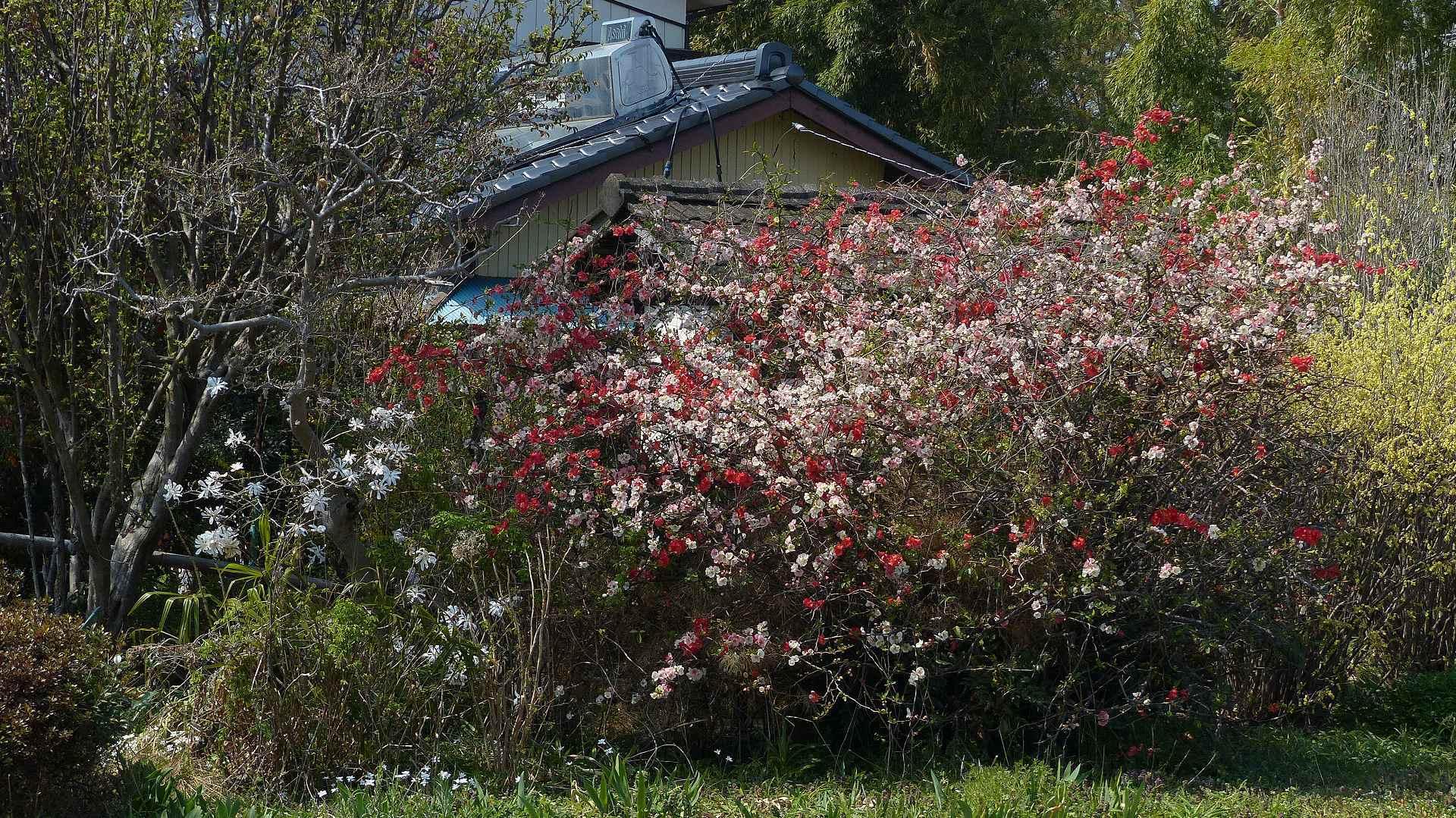 花見のあとは社寺を巡る_a0185081_14243636.jpg