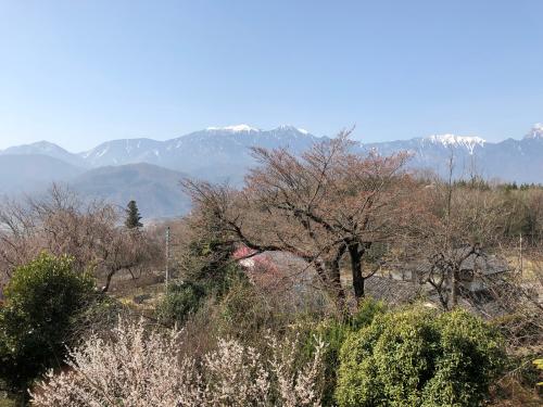 div>桜桜桜桜咲くか_d0338282_11322076.jpg