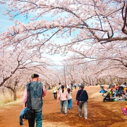 春の里帰り🌸_d0178587_20090315.jpeg