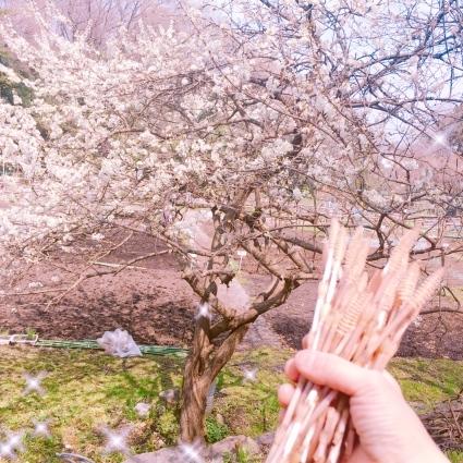 春の里帰り🌸_d0178587_20101130.jpeg