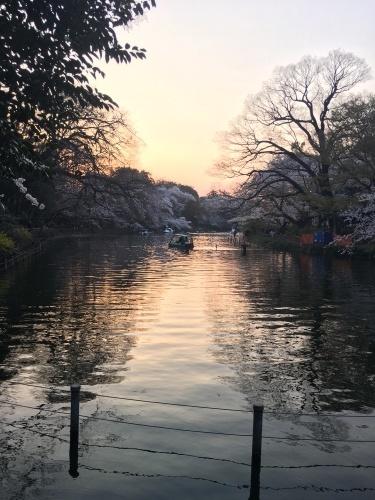 井の頭公園の桜.*✿_f0230689_20580020.jpeg
