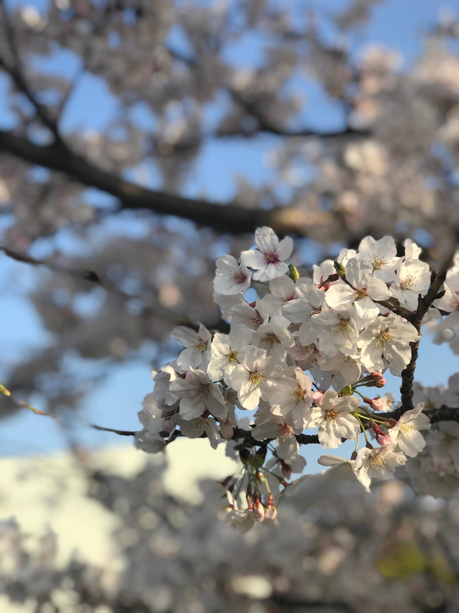 4月休園日のご案内_b0263390_09163766.jpg