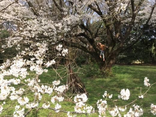 桜の天国で_f0219590_22345021.jpg