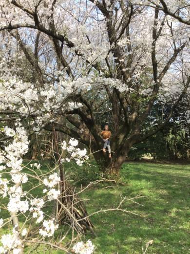 桜の天国で_f0219590_22350091.jpg