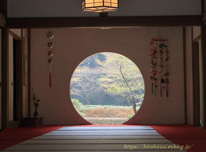 鎌倉の桜 明月院_f0374092_21102391.jpg