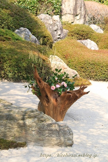 鎌倉の桜 明月院_f0374092_21131503.jpg