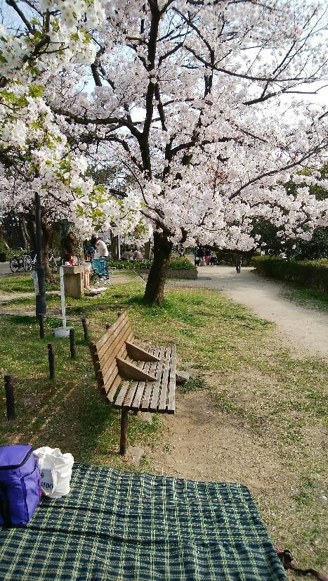 夙川の桜は見頃です..._a0188798_16031347.jpg