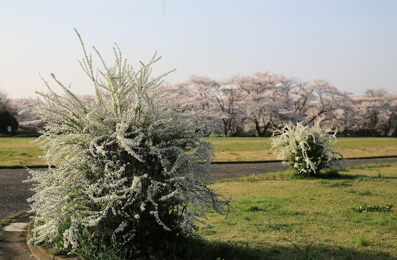 秋ヶ瀬公園散歩_f0296999_15052076.jpg