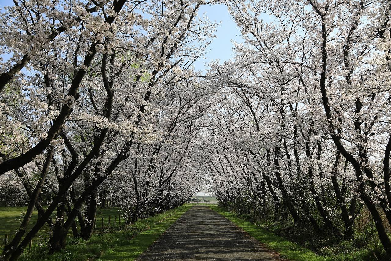 秋ヶ瀬公園散歩_f0296999_15053465.jpg