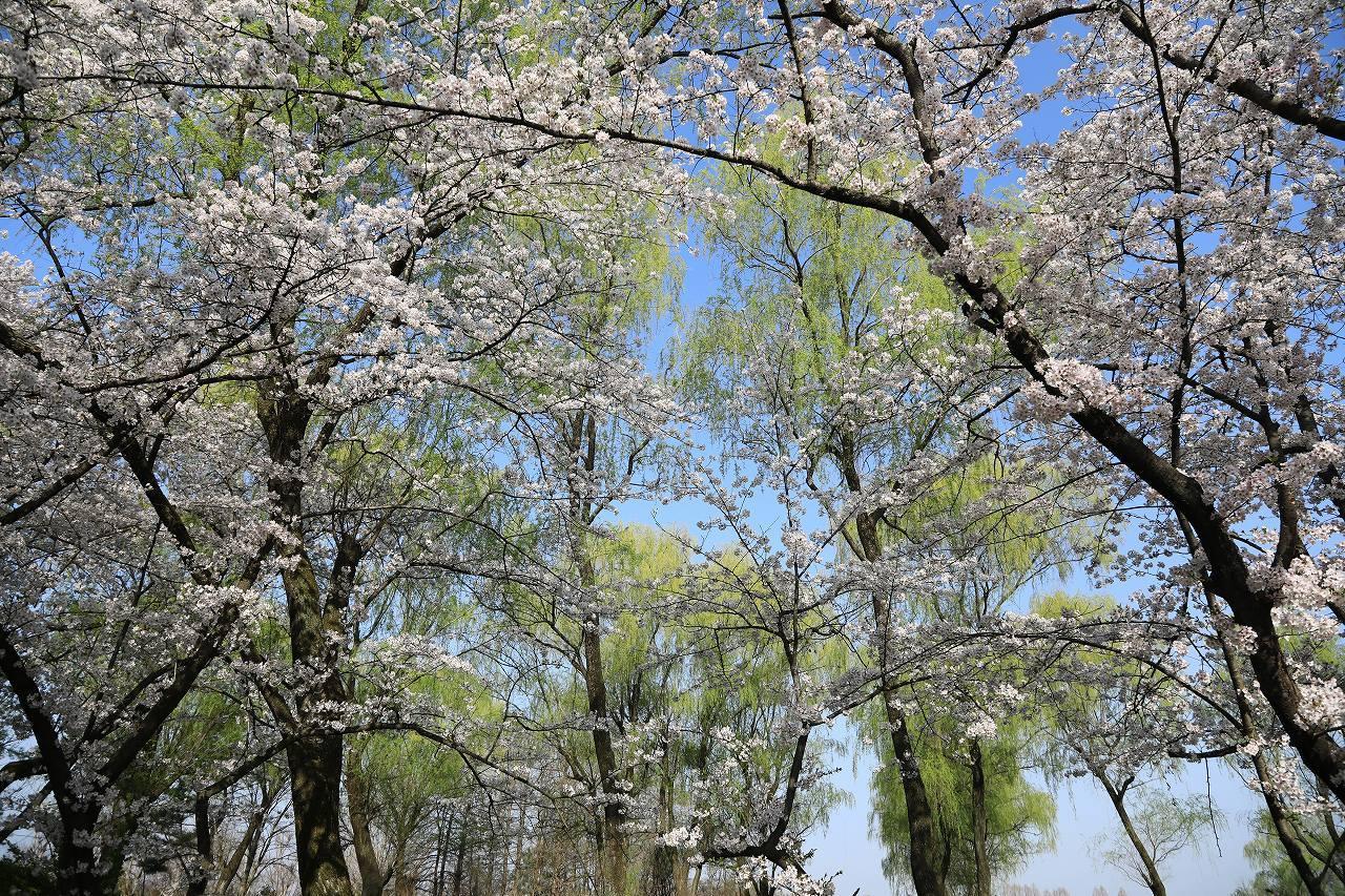 秋ヶ瀬公園散歩_f0296999_15054677.jpg
