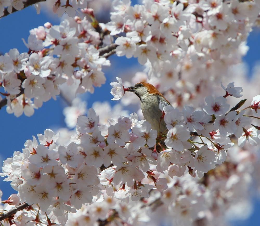 満開の桜の中で、、_f0305401_19021526.jpg
