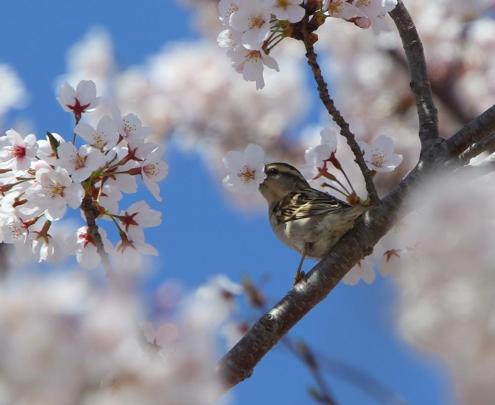 満開の桜の中で、、_f0305401_19022252.jpg