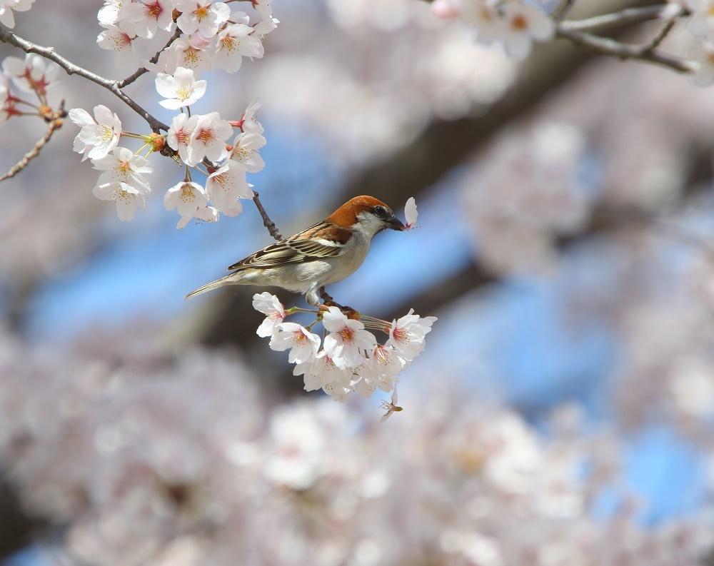 満開の桜の中で、、_f0305401_19022805.jpg