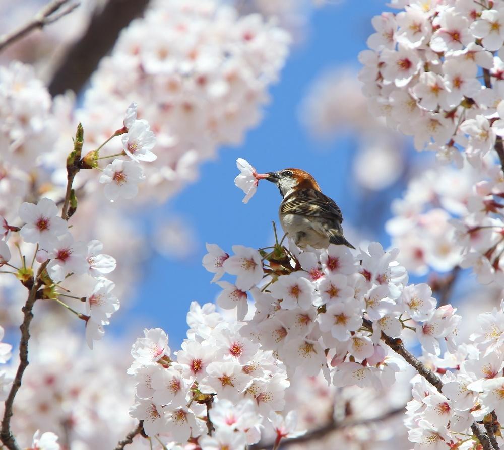 満開の桜の中で、、_f0305401_19023538.jpg