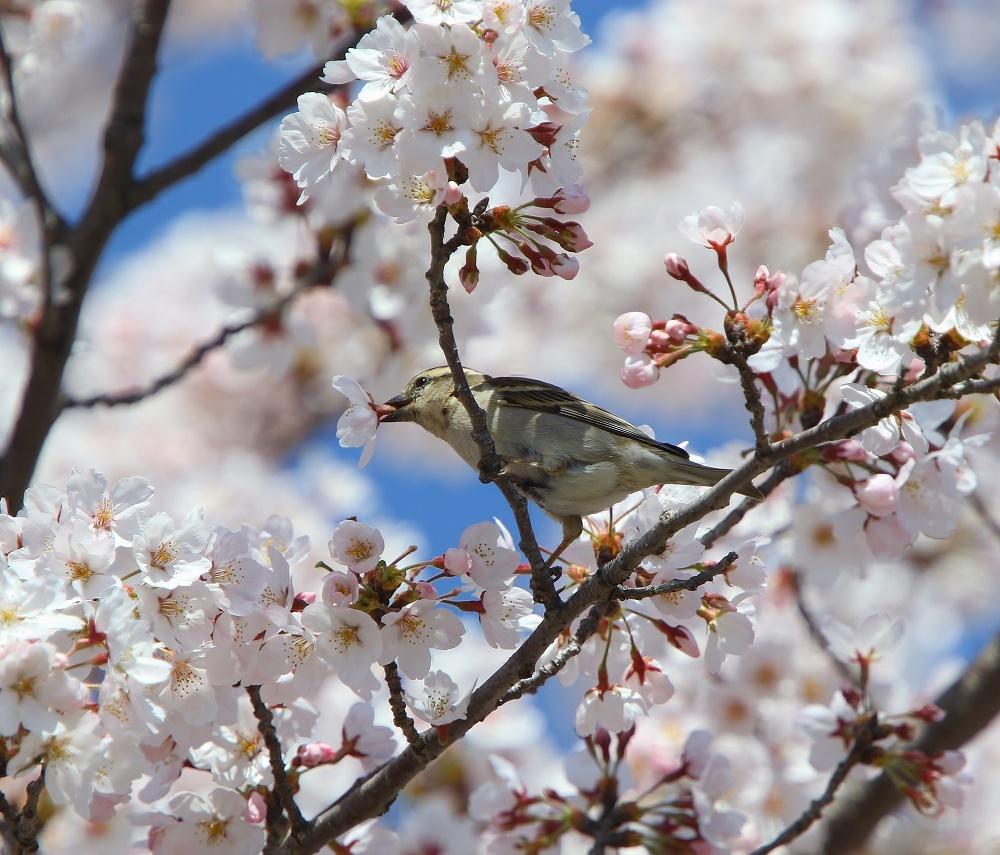 満開の桜の中で、、_f0305401_19024115.jpg