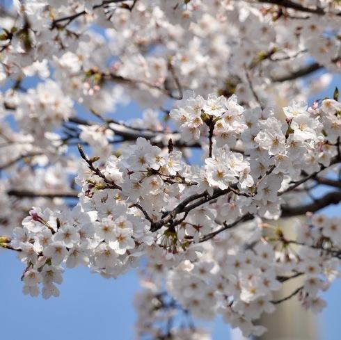 春が来た04_f0099102_11165894.jpg
