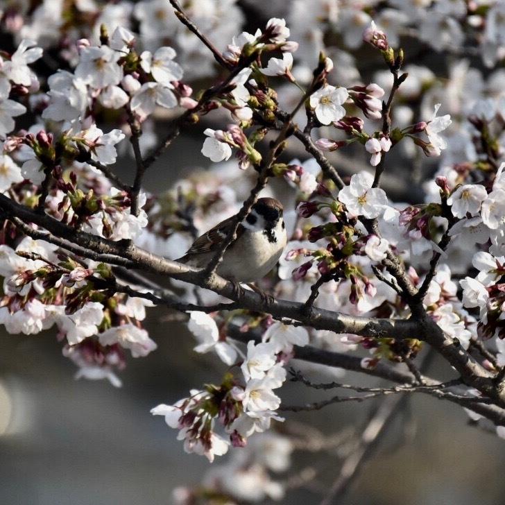 春が来た04_f0099102_11171054.jpg