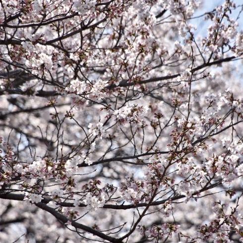 春が来た04_f0099102_11171933.jpg