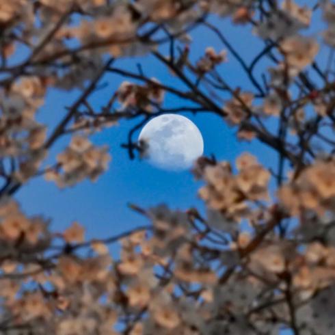 春が来た04_f0099102_11215486.jpg